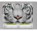 Estor enrollable FOTOGRAFIA mirada de tigre