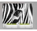 Estor enrollable FOTOGRAFIA mirada de cebra