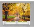 Estor enrollable FOTOGRAFIA otoño