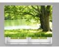 Estor enrollable FOTOGRAFIA arbol rio